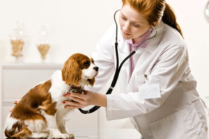 veterinary doctor